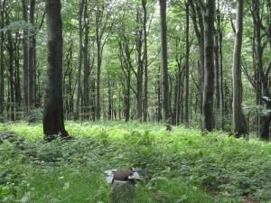 Zarośnięty wierzchołek