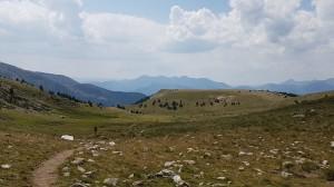Patelnia-Andorra Ultra Trail - 2019